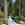 Trail im Tal des Kern River